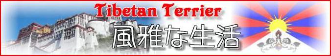 チベタンテリア風雅ウエブサイト